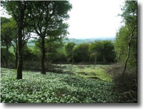Woodworks Wight :: About :: Isle of Wight Wood Fuel Strategy
